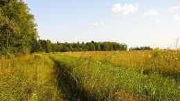 農民朋友是如何看待土地分配這個問題的呢?你覺得農村要分地嗎