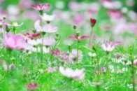 花開,詩歌十三人十三首