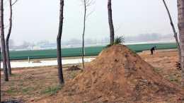 土地管理升級,3沿6區墳頭嚴整!農村新墳往哪埋、舊墳怎麼辦?