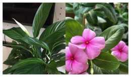 如何養花花更鮮豔